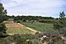 Vineyard, Pinet, Hérault 05.jpg