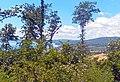 Vista del lago verso Vicarello.jpg