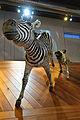 WLANL - thedogg - Wilde hond met zebra.jpg