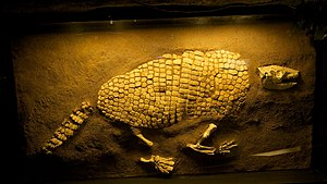 300px WLA hmns Giant Armadillo Creationists Prediction: Smarter and Better Ancestors