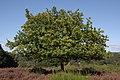Wahner Heide 2560 x 1702 300 DPI.jpg