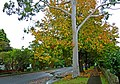 Waimea Road, Lindfield, New South Wales (2011-04-28) 05.jpg