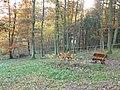 Waldfriedhof Wommelshausen.jpeg