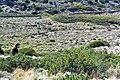 Walking towards the sea Northern Syros Natura.jpg