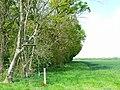 Water Eaton Copse, near Castle Eaton, Swindon - geograph.org.uk - 418593.jpg