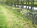 Water lilies in canal near Chichester Marina - geograph.org.uk - 790916.jpg