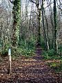 Waymarked path in Pound Wood - geograph.org.uk - 114218.jpg