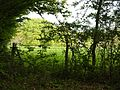 Wealden countryside 3206.JPG