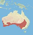 Western Grey Kangaroo Range.jpg