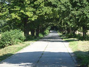 Wielopole, Nowy Sącz County - Image: Wielopole aleja