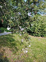 Wikimania 2019 Stockholm - Outdoor - Tree with Origami-Swans.jpg