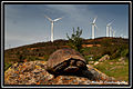 Wind power 4.jpg