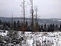 Winter 2013 - panoramio (1).jpg