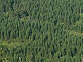 Wood Jizera Mountains.JPG