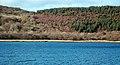 Wooded Shore Of West Loch Tarbert - geograph.org.uk - 1167107.jpg