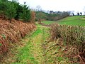 Woodland Track - geograph.org.uk - 685450.jpg