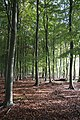 Woodland at Swaffham Heath - geograph.org.uk - 1025864.jpg