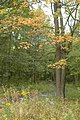 Woodlands in the fall at Rice Lake National Wildlife Refuge.jpg