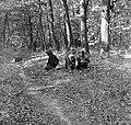 Woods Fortepan 53882.jpg
