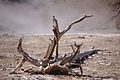 Yellowstone dead tree 1.jpg