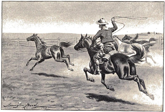 Mounted cowboy lassoing horses (as required)