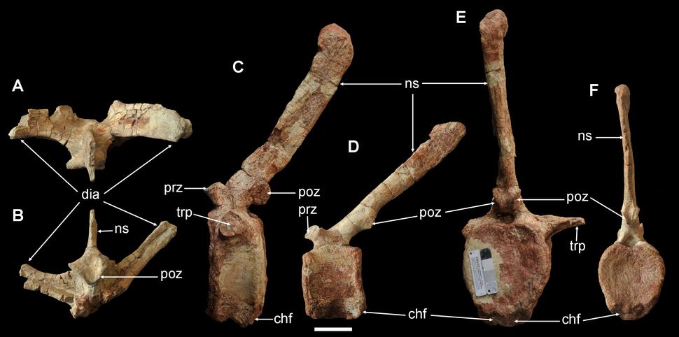 Yunganglong vertebrae