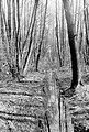 Zakole Wawerskie w Warszawie, las olchowy 006.jpg