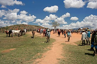 Malagasy cuisine - Zebu market in Ambalavao, Madagascar