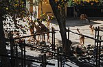Zoo de Lisboa by Juntas 46.jpg