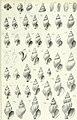 Zoologische Jahrbücher (1905) (14594639180).jpg
