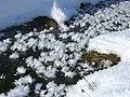"""Snow flowers"" near Slochd - geograph.org.uk - 1724381.jpg"