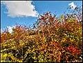 (((نمایی از پاییز در دره اشان ))) - panoramio.jpg