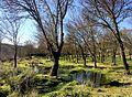 Árvores e poças - panoramio.jpg
