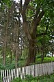 Івницький парк 02.jpg