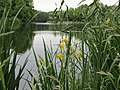 Английский пруд 4.jpg