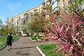 Весна в Новомиргороді.jpg