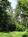 Дендрологічний парк 20.jpg
