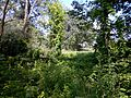 Джунгли - panoramio (3).jpg