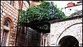 Лоза светог Симеона Мироточивог - panoramio.jpg