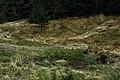 Плана - ЗЗ по директивата за местообитанията – ZZ1307 – до с. Плана, м. Чорбаджийска - No3.jpg