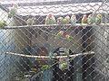 Попугаи 2 (Penza Zoo 2016).jpg
