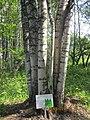 "Природный заповедник - ""KIVACH"" Кивач, Карелия-2012 - panoramio (7).jpg"