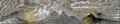 Синай (БЭАН) V-01.png