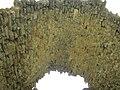 Старий Крим. Мечеть хана Узбека. Фрагмент руїн медресе.jpg