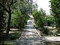 Тенистые аллеи на базе отдыха Лотос. www.azov-lotos.ru - panoramio.jpg