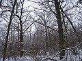 Чернечий Ліс 4.jpg