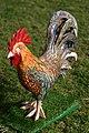 תרנגול חופשי בטבע.jpg