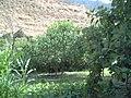 أرض زراعية متوسطة و بها مختلف الاشجار كامشمش و العنب و مختلف الثمرات.jpg