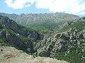 جنگل کیاسر 2 - panoramio.jpg