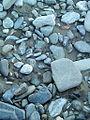 سنگ رودخانه کوبچ.JPG